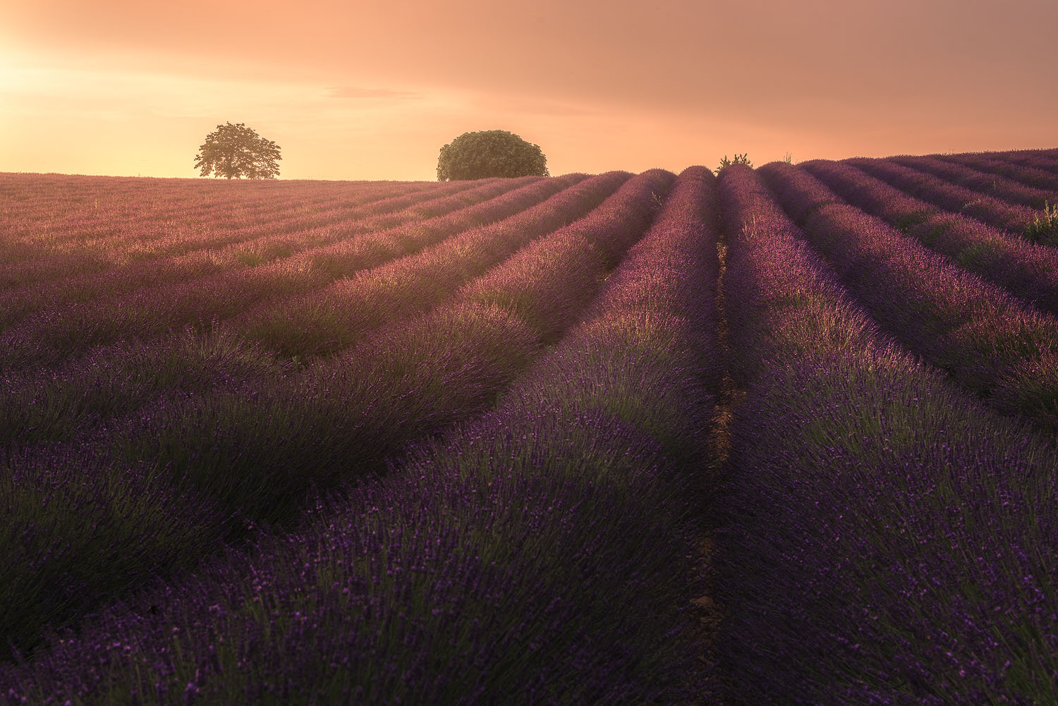 BTS: Composing Milky Way & Golden Hour Shots At The Lavender Fields